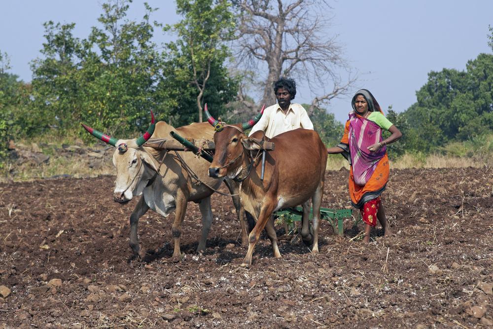 Bridging the Digital Gap in Rural India