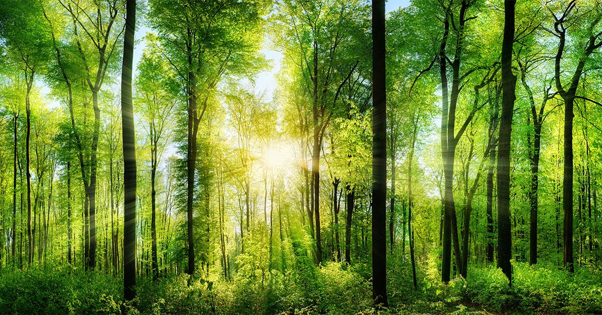 Environment Funds May See A Surge