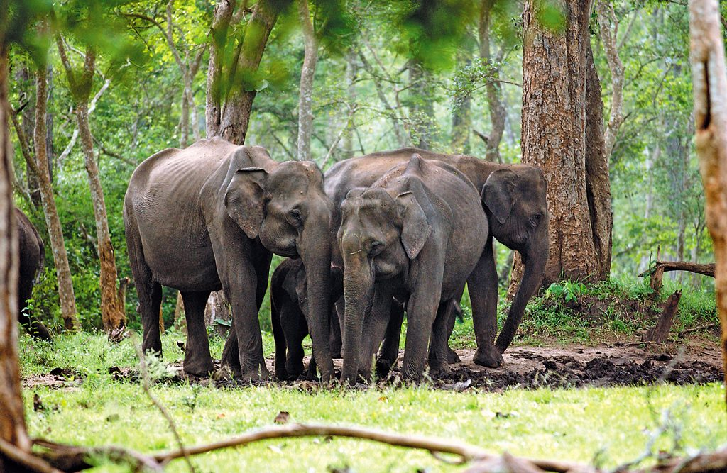Image result for Nilgiris Biosphere Reserve
