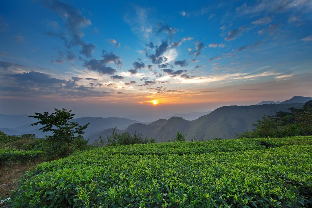 Vagamon Tour Packages from Coimbatore