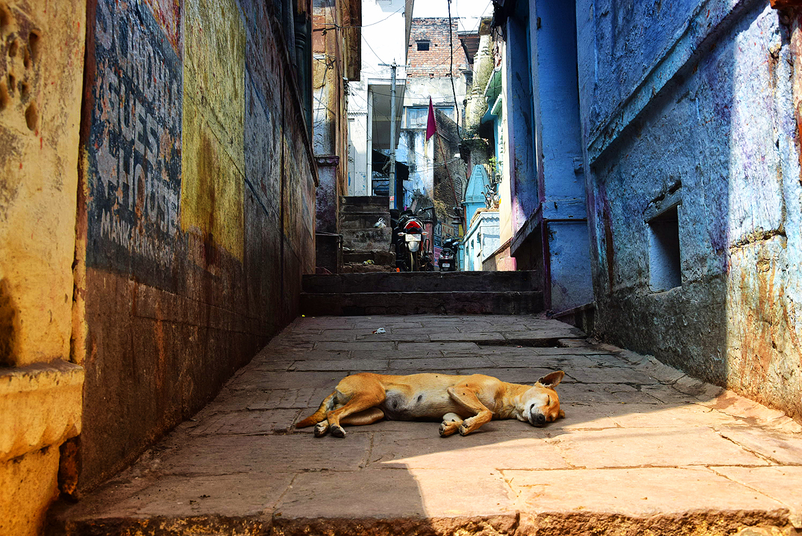 This dog takes her siesta very seriously