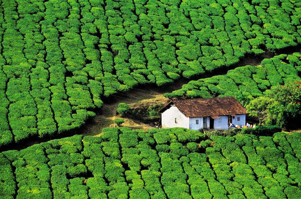 Kerala: Cardamom, Tea and Idukki - Outlook Traveller