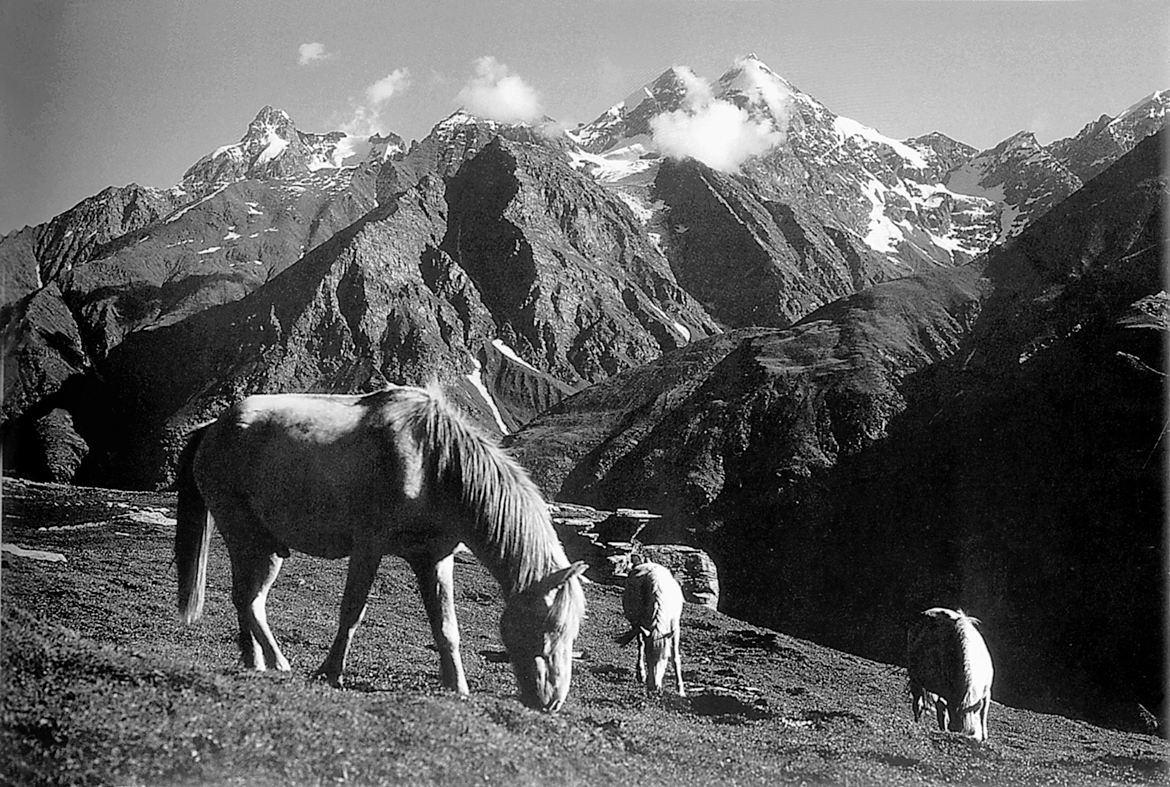 Ponies graze at a meadow near Rohtang La