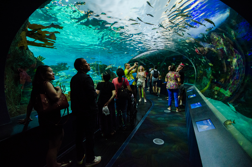 Dangerous Lagoon's underwater tunnel