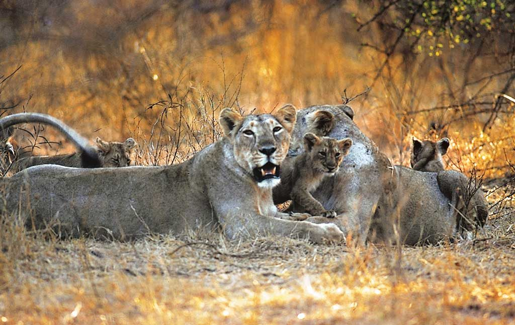 National Parks and Wildlife Sanctuaries of Gujarat - Outlook Traveller