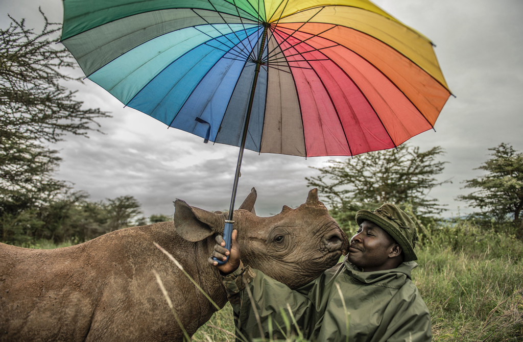 Kamara is nuzzled by 18-month-old black rhino Kilifi at Lewa Wildlife Conservancy in Kenya. Kamara spends 12 hours every day caring for this and two other baby rhinos.