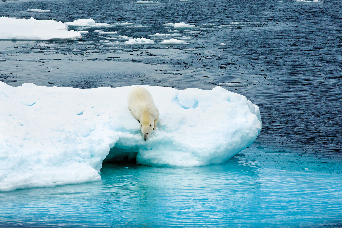 Intimate encounters with polar bears make for dramatic photographs