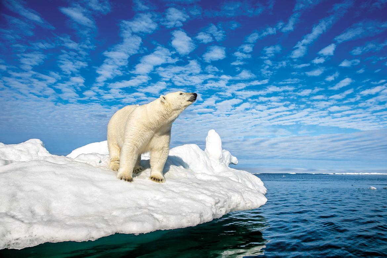 Tufts of cloud in an azure sky loom over a solitary polar bear on drift ice