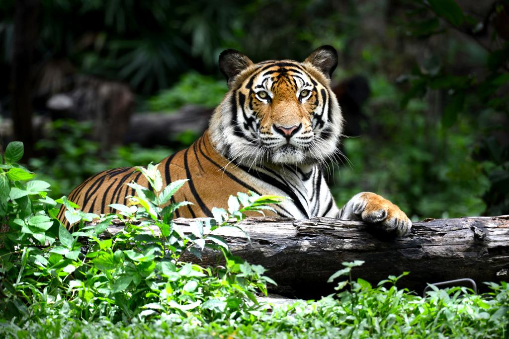 5 wildlife gems of uttar pradesh outlook traveller