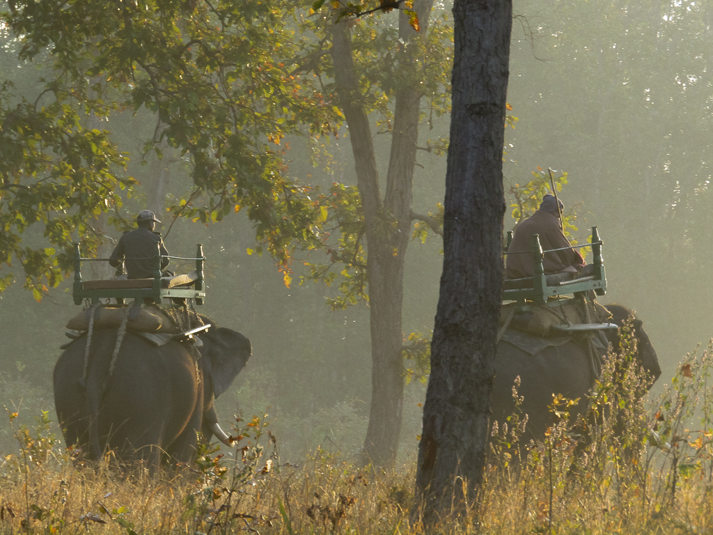 Forest Department's patrolling team at work early in the morning at Kanha National Park