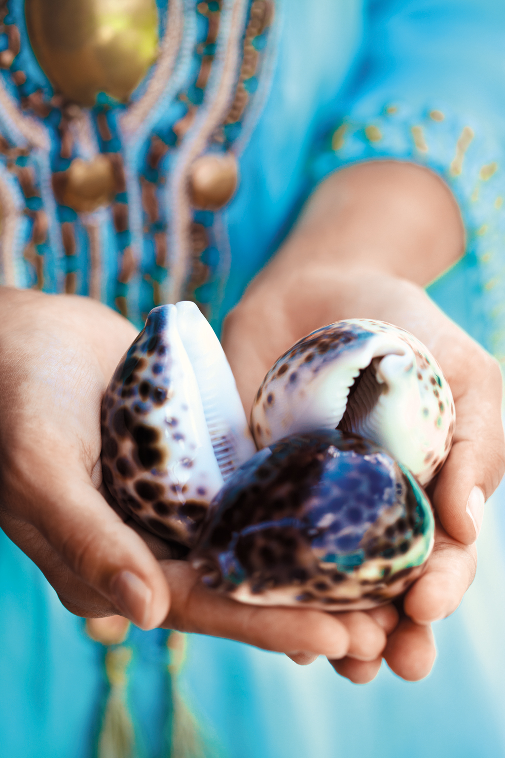 A group of colorful cowrie shells found on the island