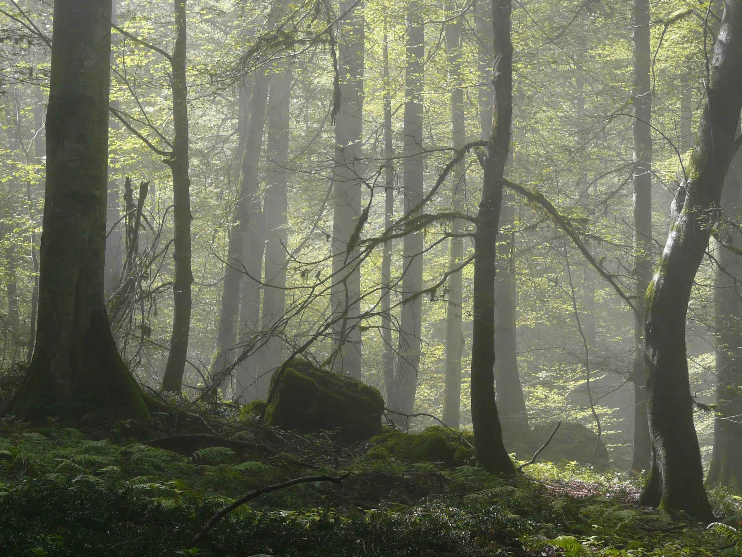Forêt de hêtres, Mazandaran