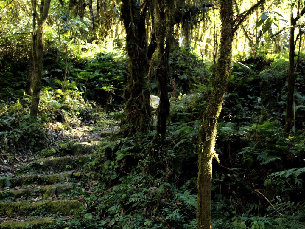 A hike through the Maenam Wildlife Sanctuary