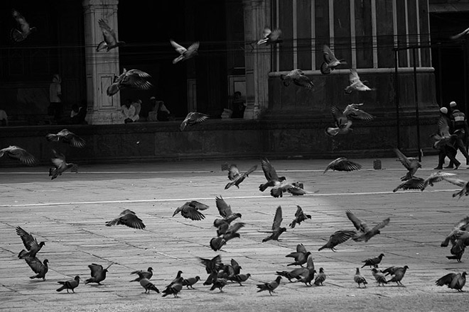 It's roza for the devotees, not for free birds. And there's enough grain for them to feed on at the masjid's courtyard