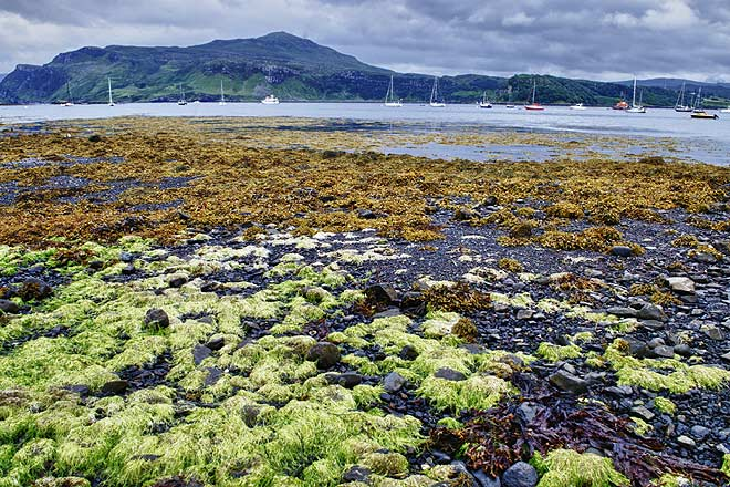 The low tide in the harbour reveals a colorful landscape, Portree, Isle of Skye