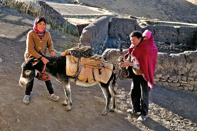 Kunga Chorden's parents saddle a donkey for a visit to the market at Kaza