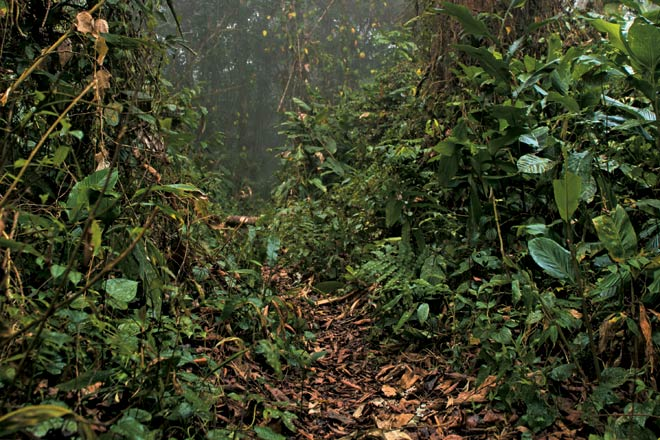 Walking tracks through the thick undergowth of Namdapha to Nwzakhaw village inside the core area of the park