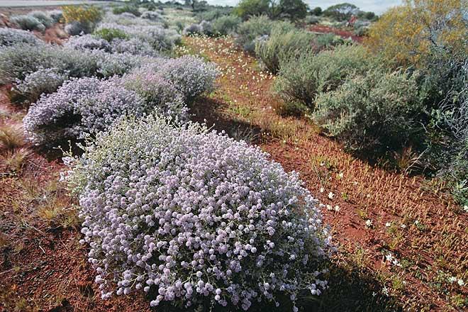 More flowers in the desert