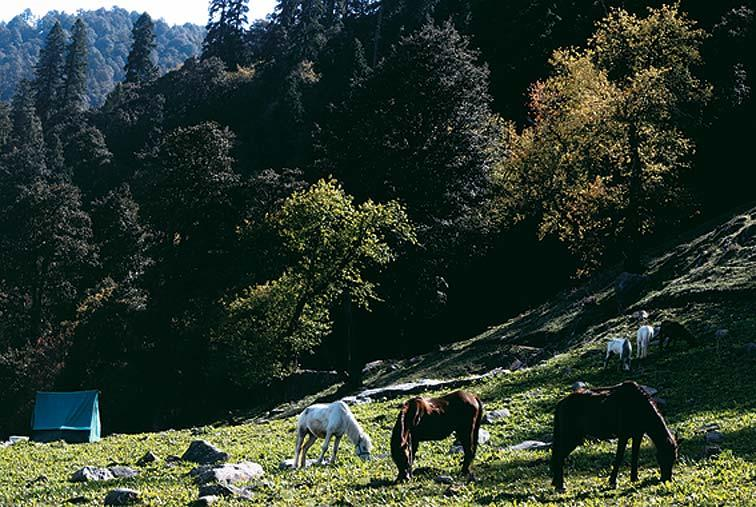 The horses take a break at the end of a long and tiring day.