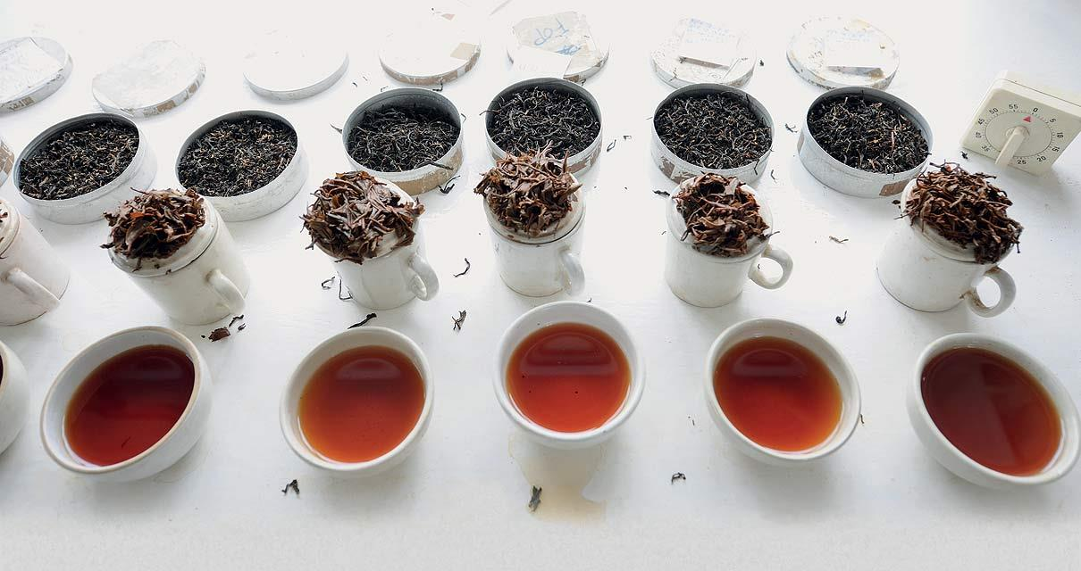 Bold and colourful Assam teas have bright, coppery tones. (From the book Chai: The Experience of Indian Tea, by Rekha Sarin and Rajan Kapoor; Published by Niyogi Books; Price Rs 1,995)
