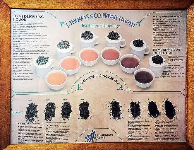 The vocabulary that tea tasters employ to describe their observations resembles the terms used by wine tasters. (From the book Chai: The Experience of Indian Tea, by Rekha Sarin and Rajan Kapoor; Published by Niyogi Books; Price Rs 1,995)