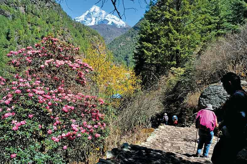 My wife Paula passes a rhododendron arboreum in full bloom below the Sagarmatha Park gates near the village of Jorsale. The peak in the background is Khumbila, sacred to the Sherpas