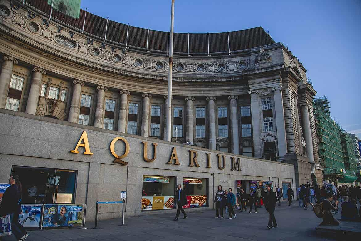 The Sea Life London Aquarium, located near the London Eye, is a popular place for children with its huge collection of marine species, and the option of snorkelling with sharks.