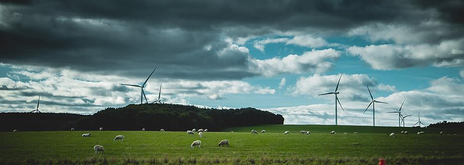 Wind turbines loom over calmly grazing sheep in the countryside.