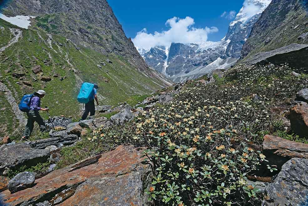 Members of the team walk up past blooming rhododendron bushes stunted by the lack of oxygen just below the treeline.