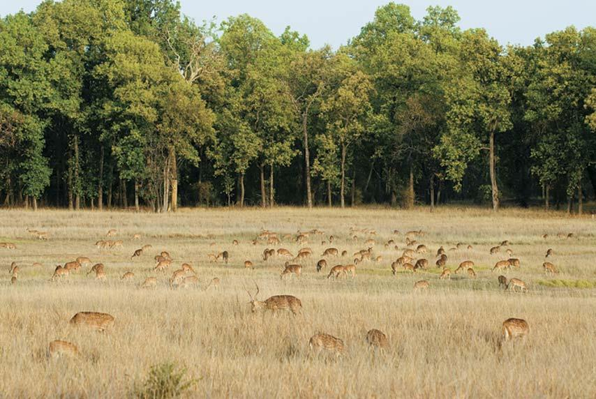 Central Indian jungles- The forests of Central India hold wonderful natural treasures. Bandhavgarh National Park in Madhya Pradesh, featured here, lies between the Vindhya and Satpura hill ranges. Both moist peninsular Sal forests and moist deciduous forests are found here. A characteristic of these forests is that one can pass through dense jungles to emerge onto rolling grassland in minutes. There's plenty of wildlife - over 22 species of mammals, 250 species of birds, 75 varieties of butterflies. Stay at Mahua Kothi (www.tajsafaris.com), which has excellent naturalists, trained by co-employers CC Africa.