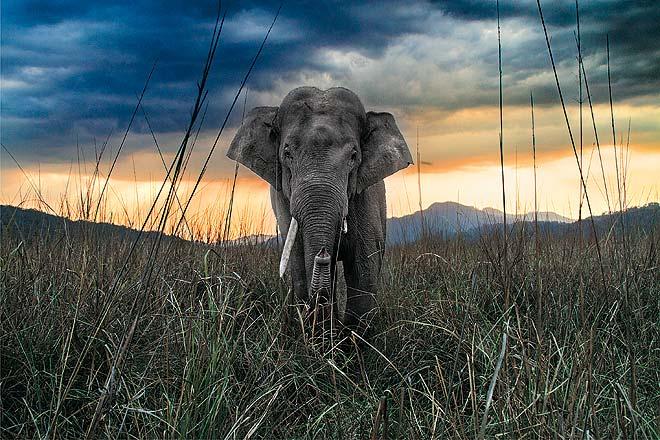 A curious elephant approaches the photographer at Jim Corbett National Park in Uttarakhandild