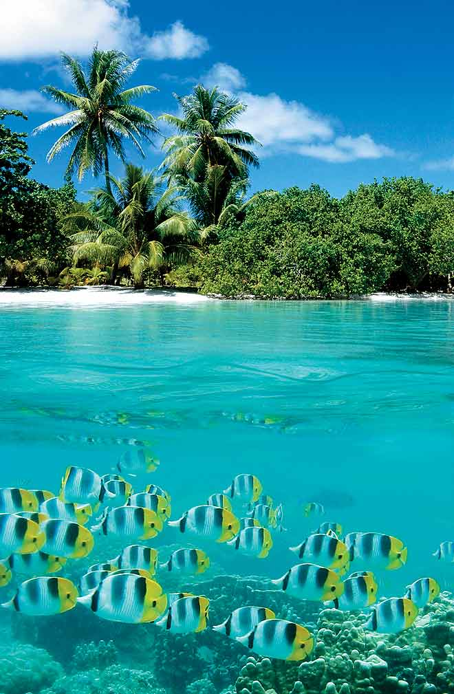 A school of chromatically rich tropical fish