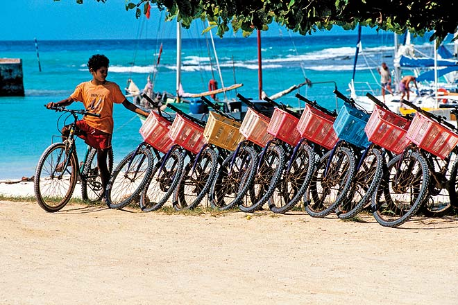 Colourful bicycles for rent at La Digue Island