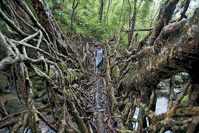 Walking on the root bridges in Meghalaya is an experience of a lifetime