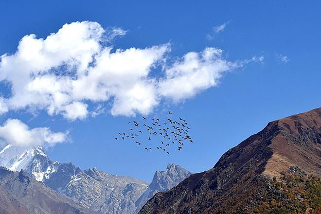 A flock of birds enjoying a cobalt sky
