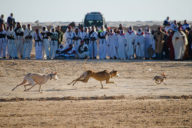 Dogs chasing rabbits and camel fighting are also part of the traditional sports