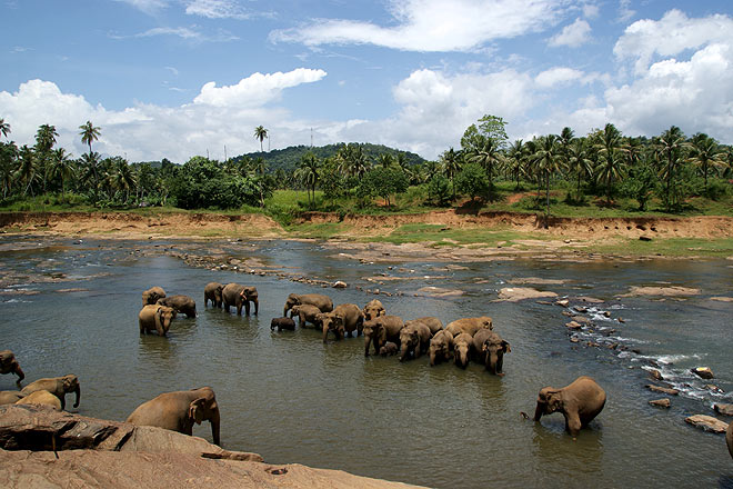 The gentle giants at Pinnawela Elephant Orphanage