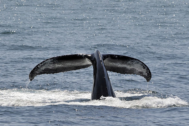 Whale watching in the Sri Lankan waters