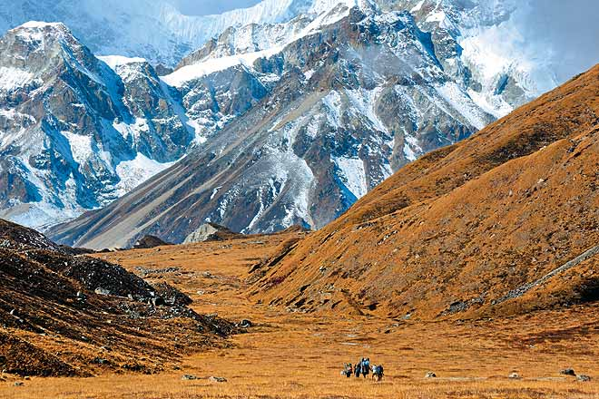 Porters head towards the Zemu glacier from the Rest Camp with the massive wall of Simvu looming over the valley