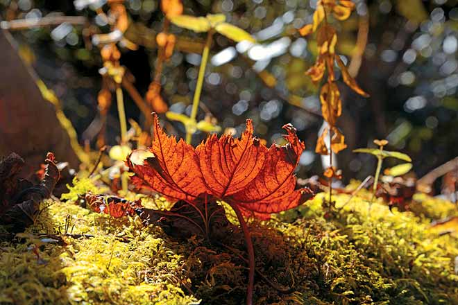 Fallen leaves in the undergrowth