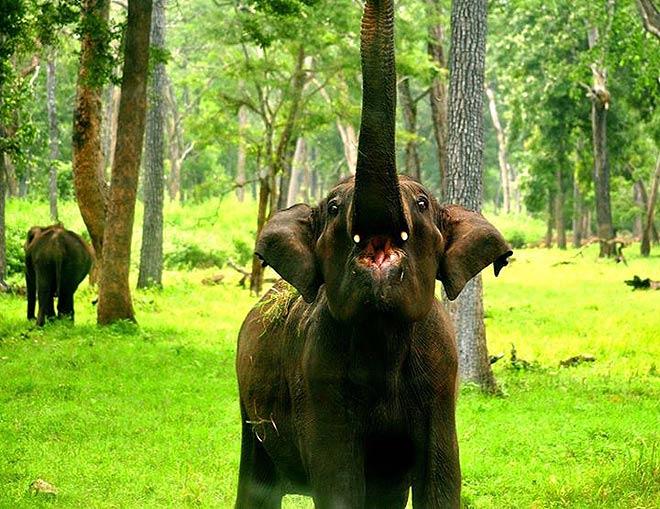 A baby elephant at Kabini