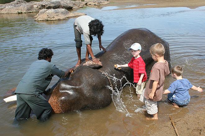 Washing an elephant in Bheemeshwari