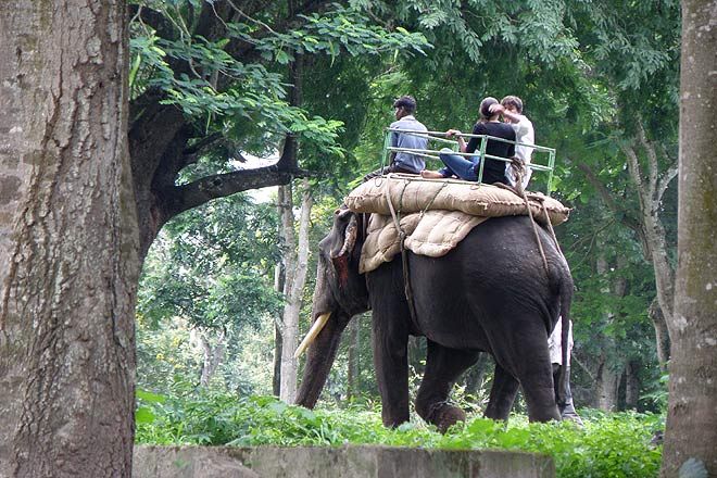 Elephant ride in Dubare
