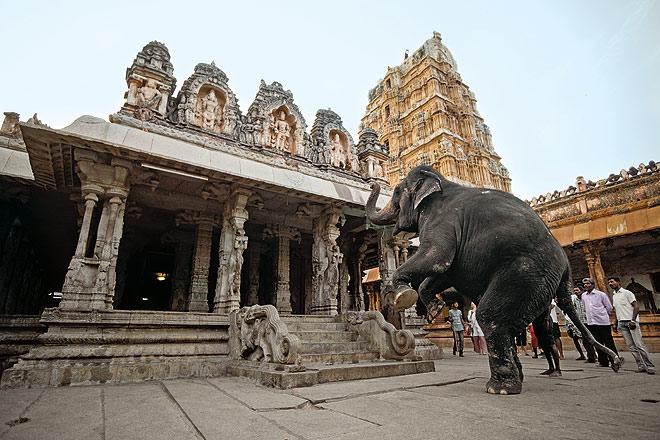 A temple elephant at the Virupaksha Temple in Hampi