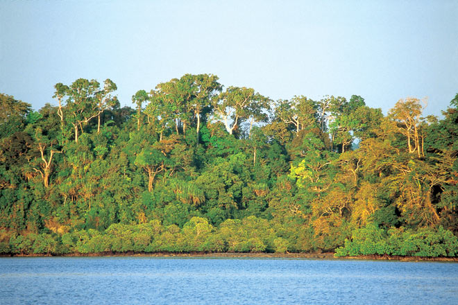 Tropical rainforest canopy in Andaman and Nicobar Islands