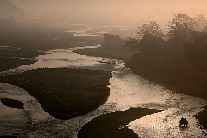 An Asiatic elephant makes its way through the gushing waters of the wide Ramganga river