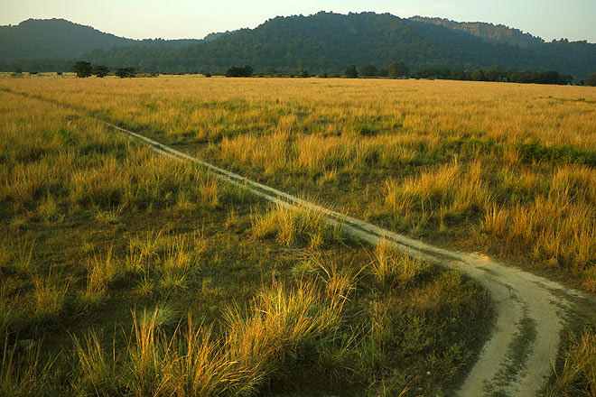 A track runs through the Dhela grasslands, home to a tigress and her cubs
