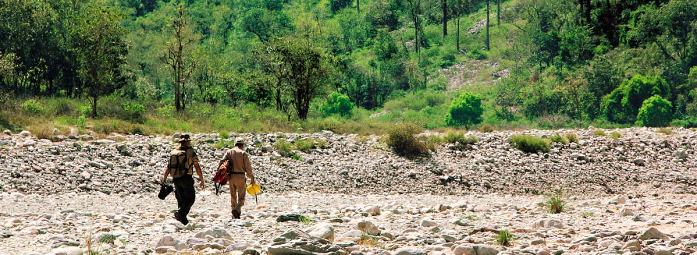 Uttarakhand: In Corbett Country