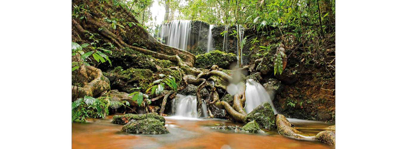 Western Ghats: Tour of the Agumbe Rainforest