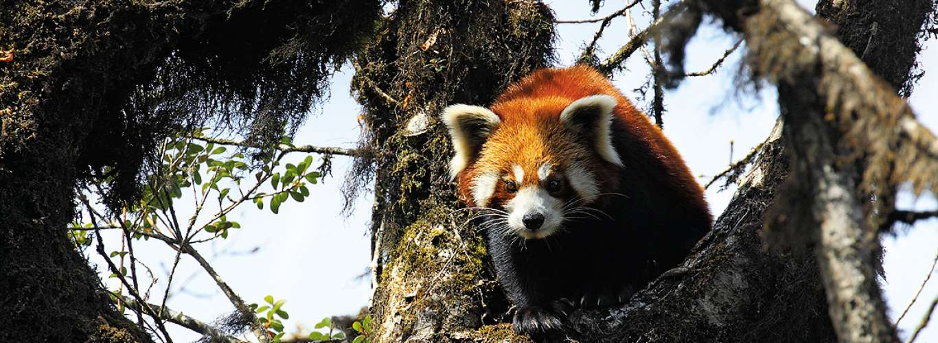 West Bengal: The Firefox Quest